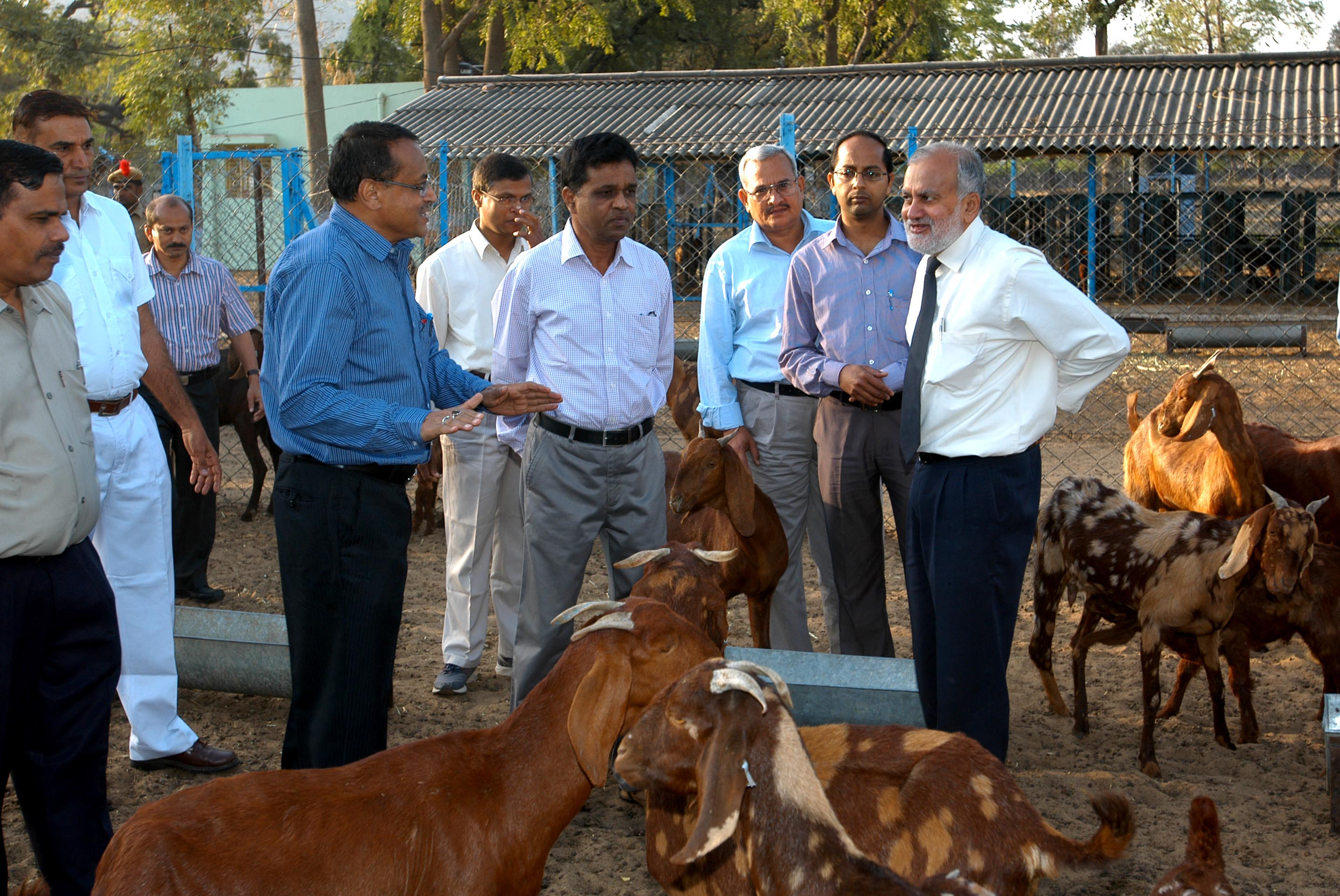 Visit to Goat Sector