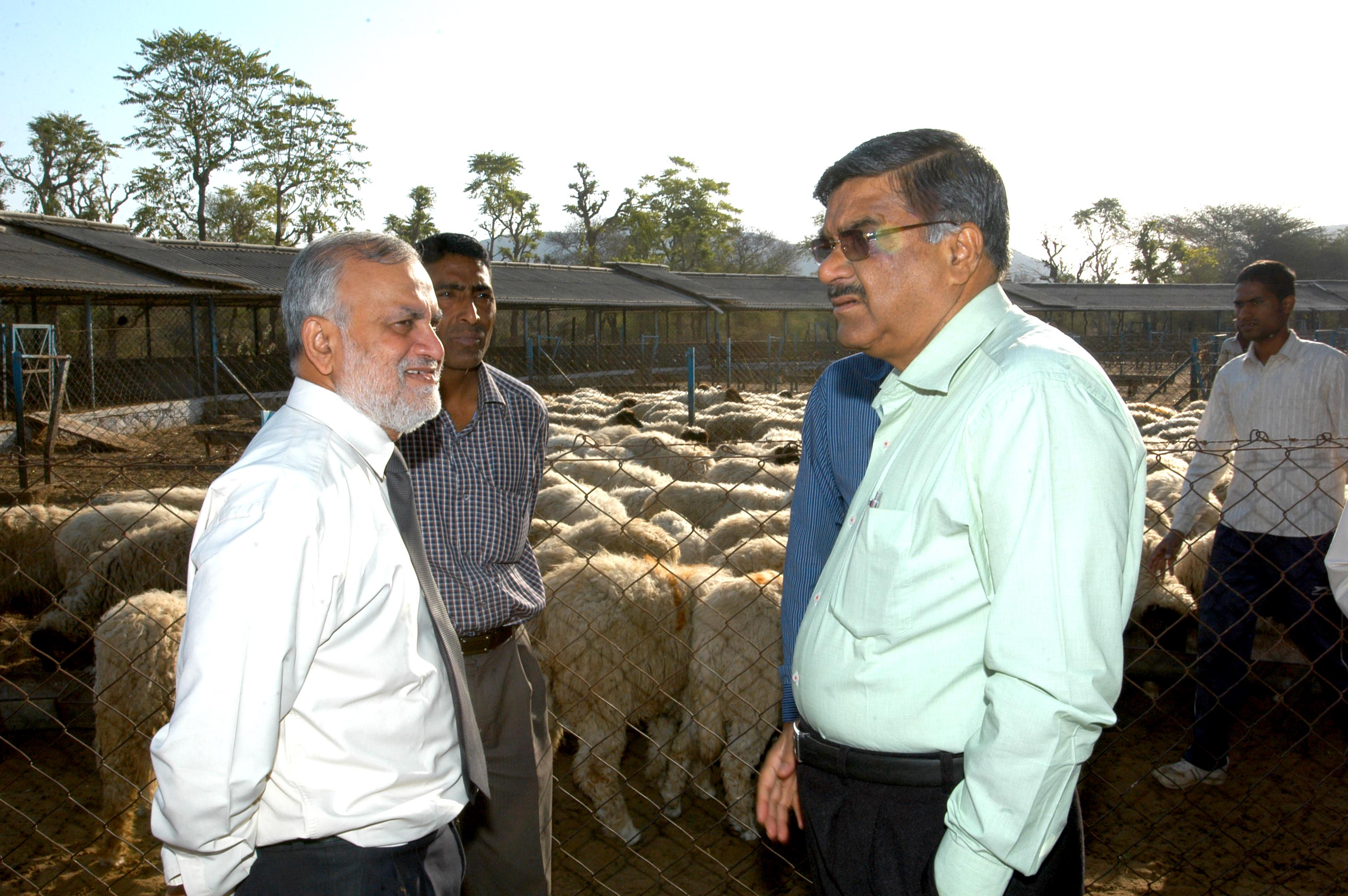 Discussion at Sheep Sector 18