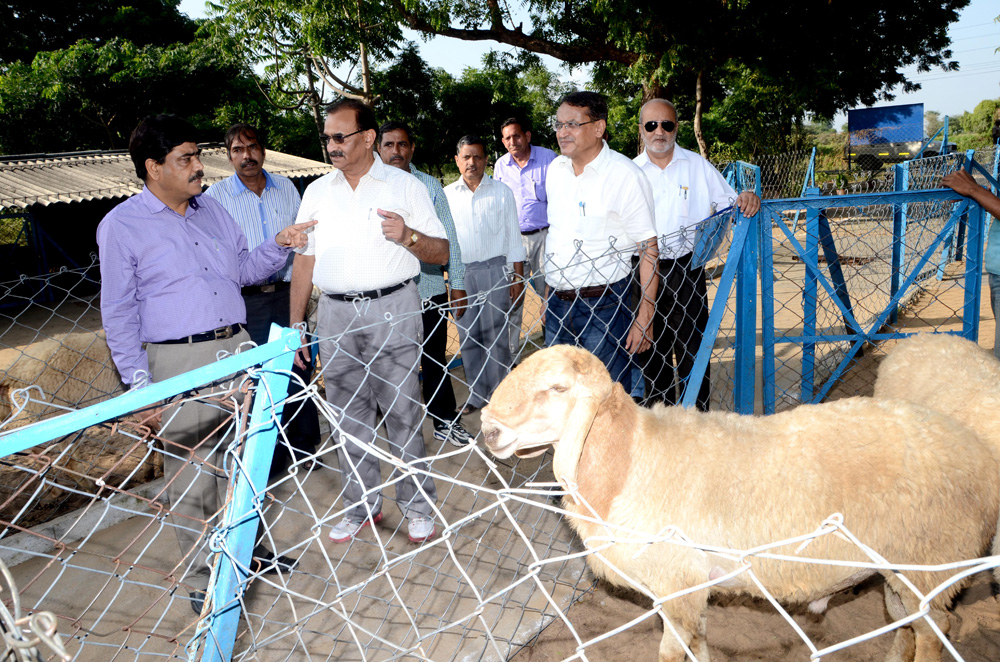Visit to animal sectors