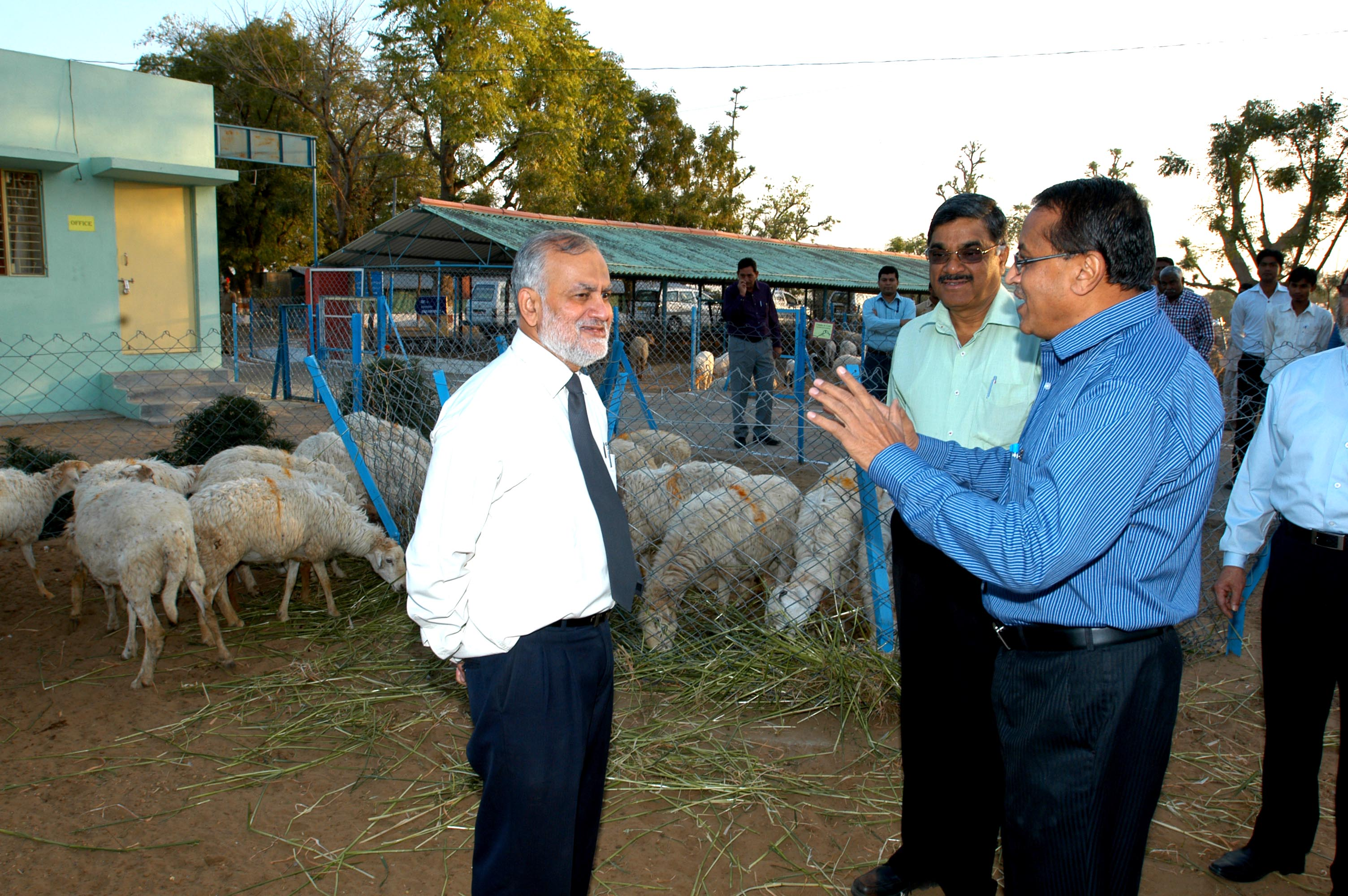 Director CSWRI Expressing Sheep Management Techniques